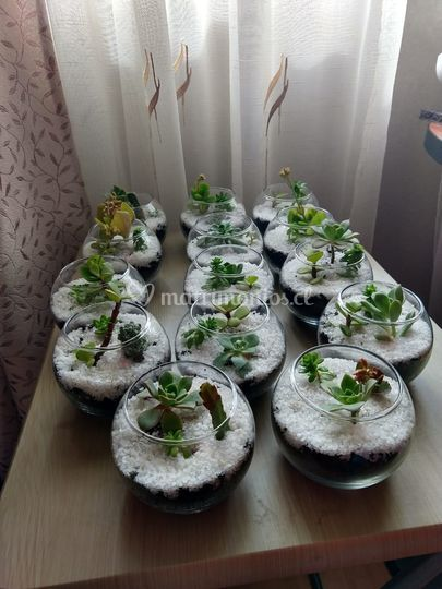 Peceras con suculentas/cactus