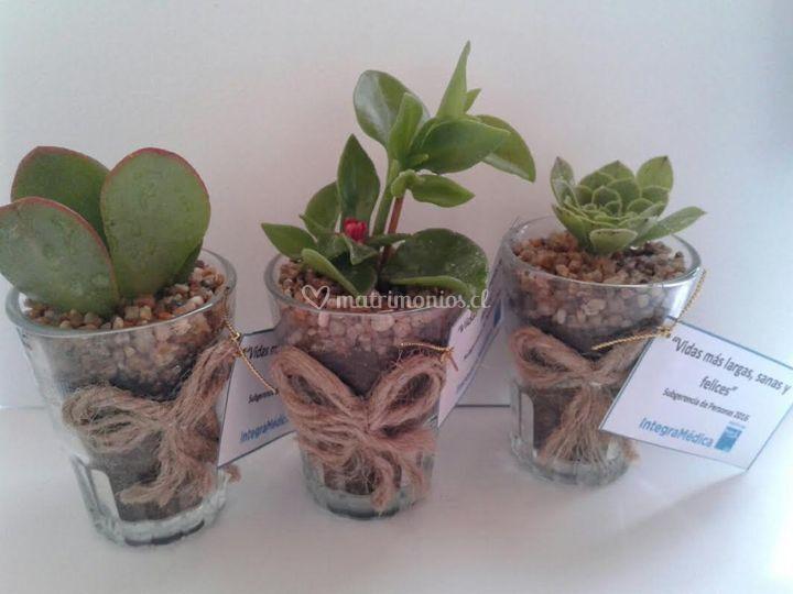 Cactus Suyai