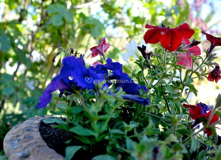Hermosos coloridos