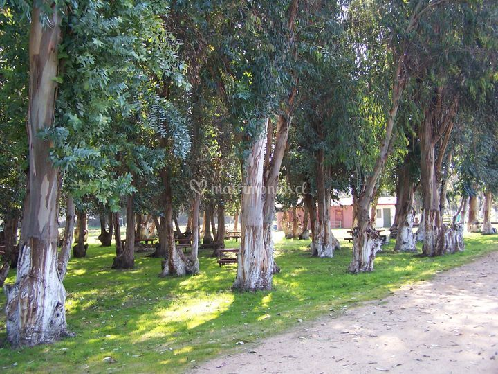 Bosque frente restaurant