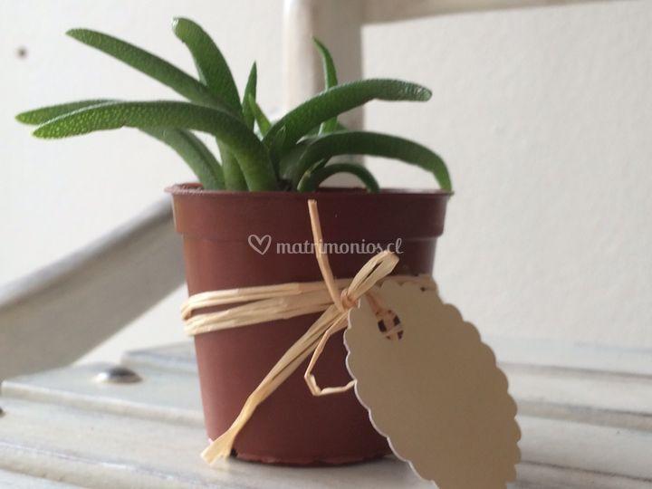 Mini plantitas