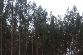 Mirador Las Cañas