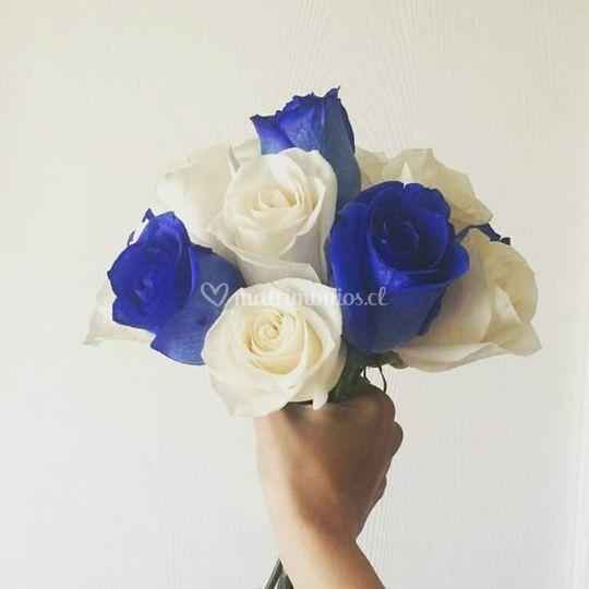 Bicolor, rosas azul