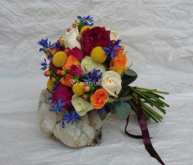 Silvestre multicolor
