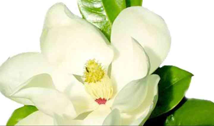 Blancas pureza