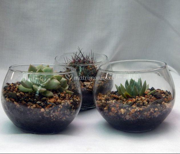 Peceras con cactus