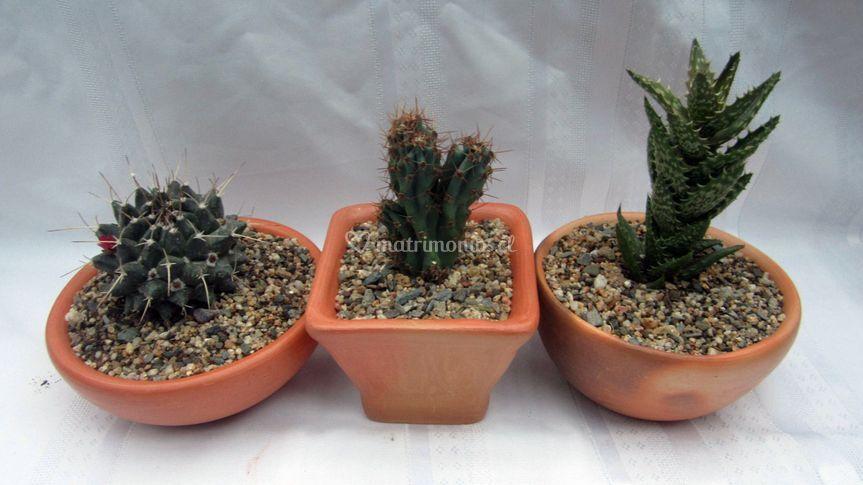 Cactus en arcilla