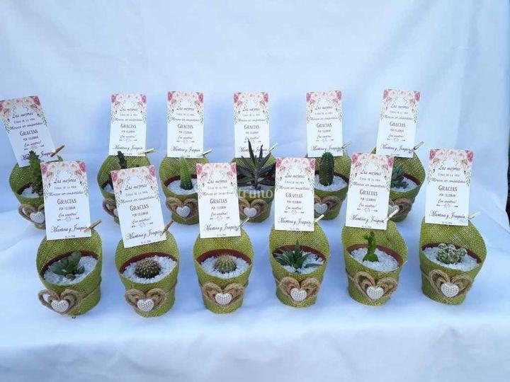 Kadú Cactus y Suculentas