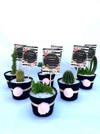 Macetas de cactus y suculentas