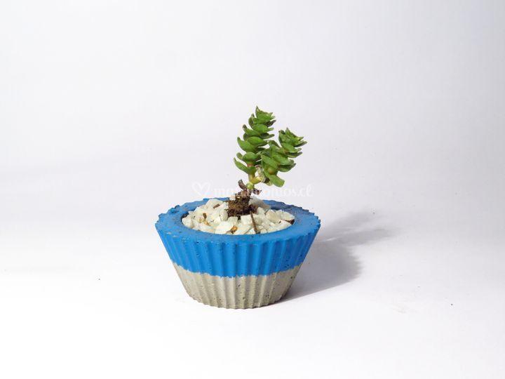 Mini macetero cupcake