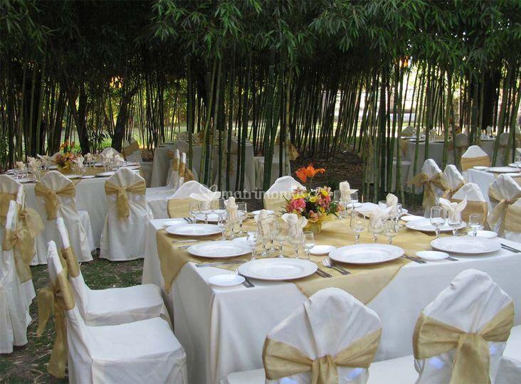 Matrimono bosque de bambú