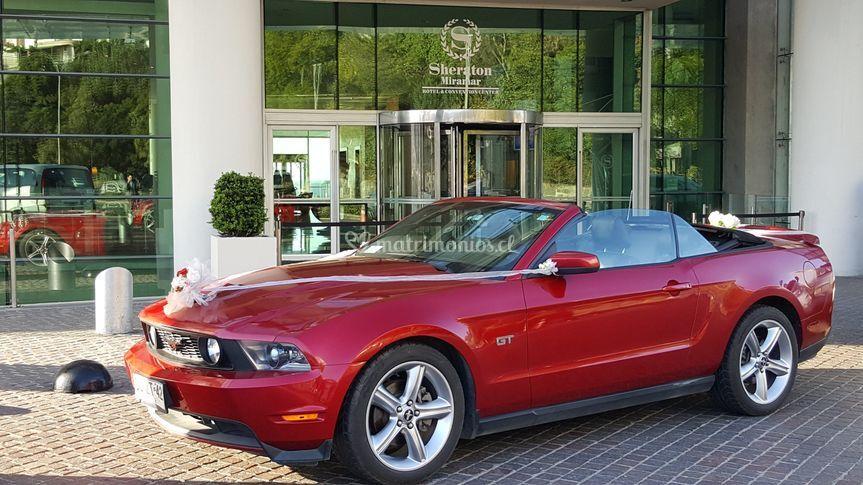 Mustang Viña