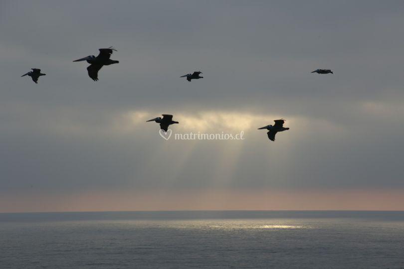 Pelícanos en el horizonte