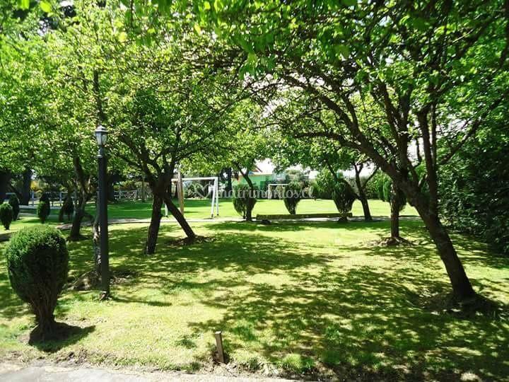 Jardín de manzanos