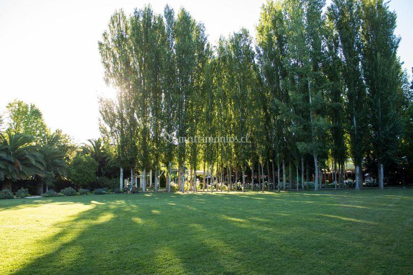 Parque de álamos