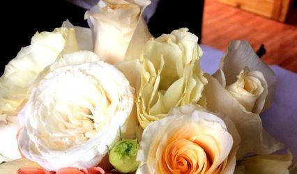 Magnolia Calipso Flores