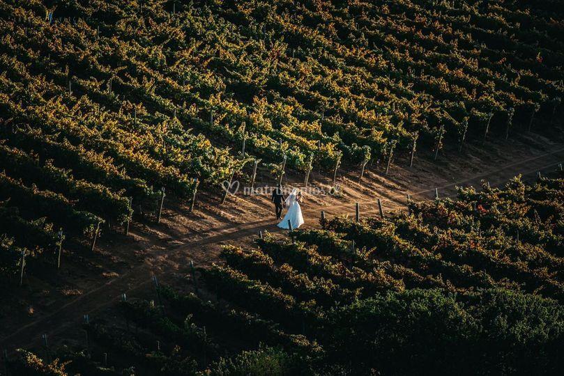 Novios entre los viñedos