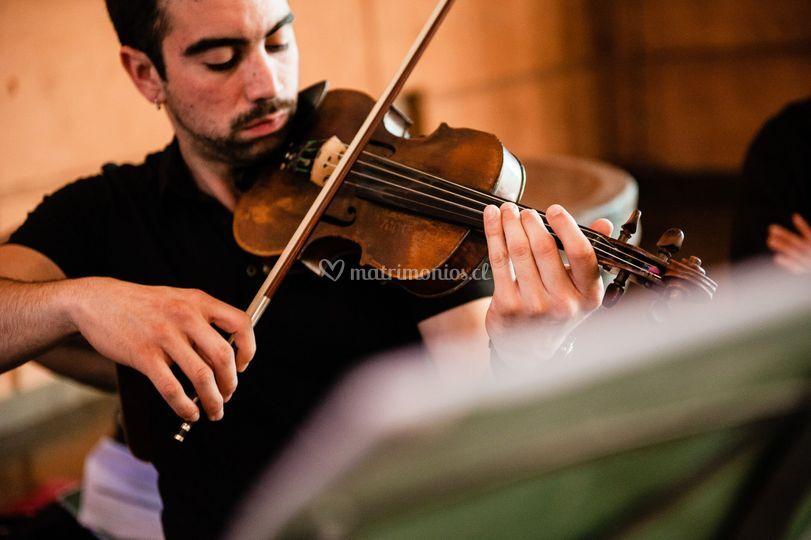 Músico - Violín