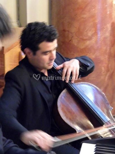 Músico - Cello
