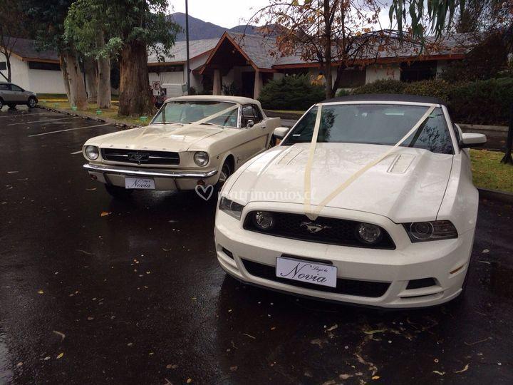 Mustang Clasico y Moderno de Llegó la novia