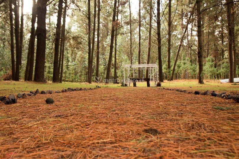 Zona ceremonia bosque