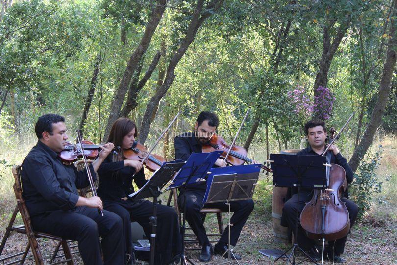 Cuarteto de cuerdas Santiago Arte