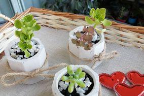 Suculentas y Cactus Hina