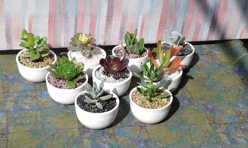 Casa del cactus for Viveros en penalolen