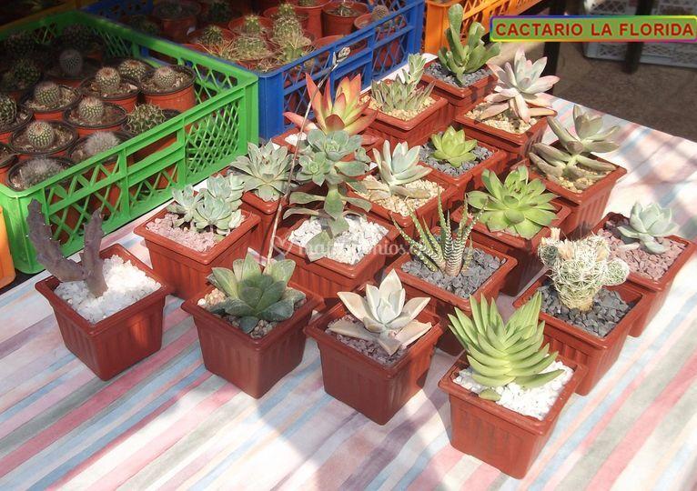Casa del cactus for Suculentas santiago