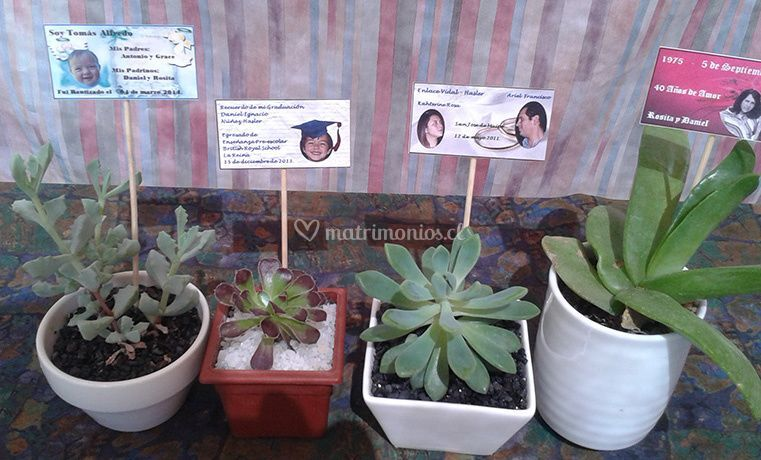 Casa del Cactus