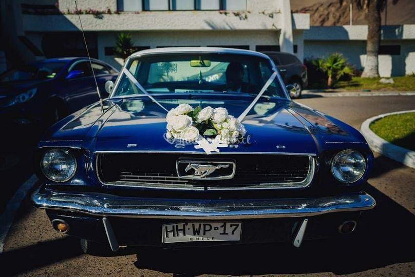 Mustang hardtop