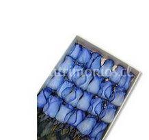 Rosas azules en caja