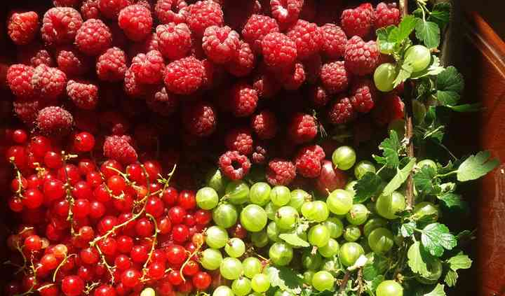 Berries frescos de la zona