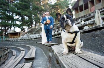El rol de su perro el día del matrimonio