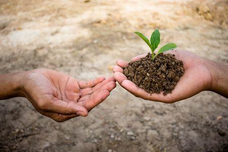 Ceremonia de la plantación: un ritual para perpetuar el amor