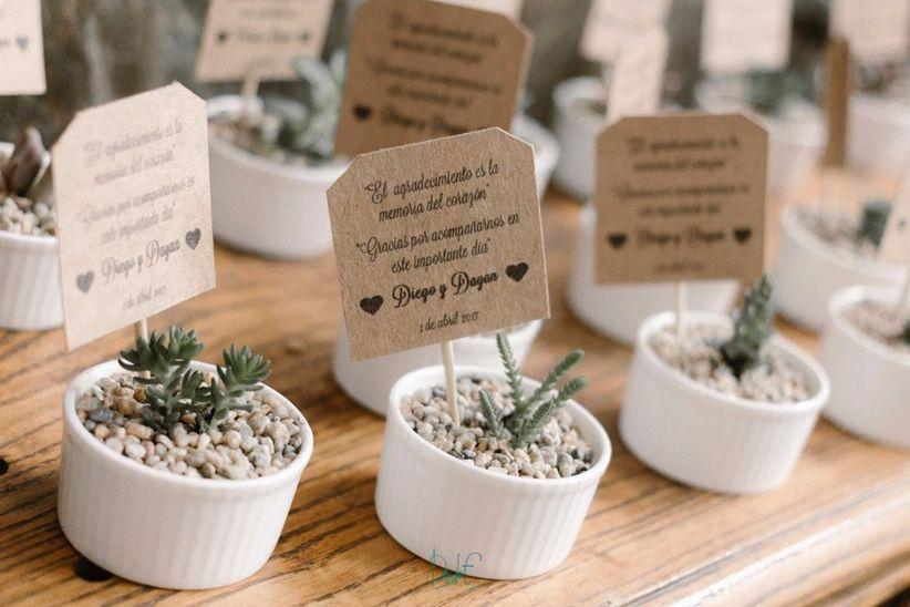 e62dc55817 Cactus como detalles para los invitados  30 presentaciones únicas