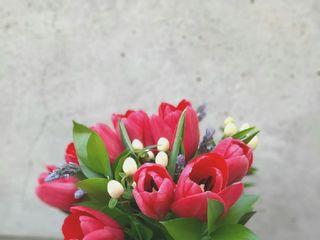 Flores & Piedras 1