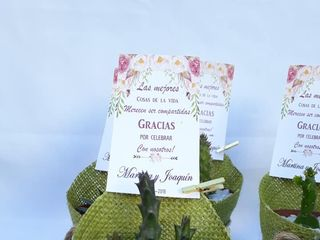 Kadú Cactus y Suculentas 6