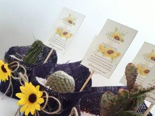 Kadú Cactus y Suculentas 3
