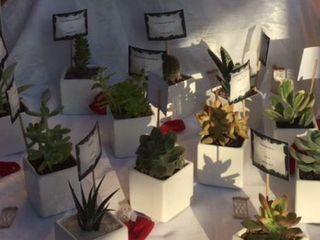 Casa del Cactus 2