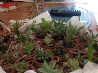 Plantiquería 7