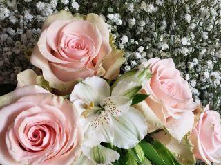Flores Consentida 1