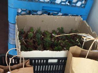 Plantiquería 4