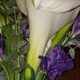 Alta Flor 14