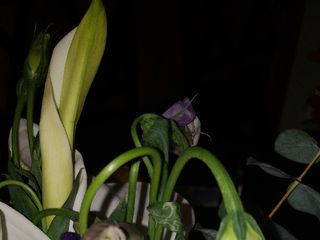 Alta Flor 2