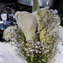 Alta Flor 16