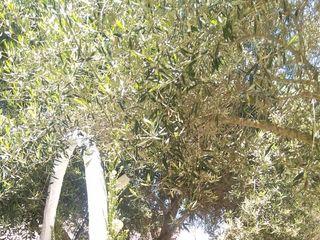 Campo Getsemaní 5