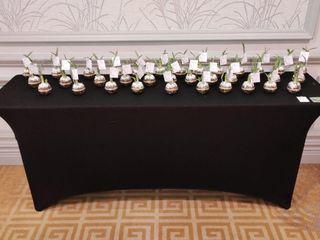 Cactus Suculovers 2