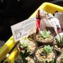Cactus RSAFI 2