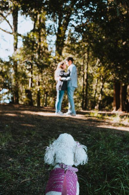 Tu amigo de 4 patas...¿va a tu matrimonio?...¡Sube una fotito, así lo conocemos! 6